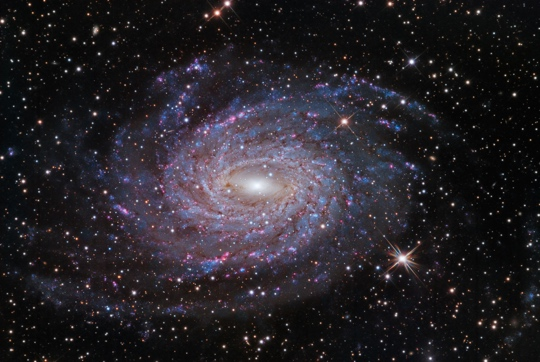 NGC 6744 in Pavo - Image Courtesy of Warren Keller, Steve Mazlin, Steve Menaker and Jack Harvey.