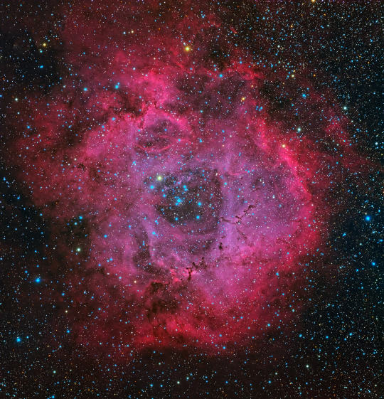 NGC 2237 (The Rosette Nebula) and NGC 2244 acquired by Michael Miller and processed by Warren Keller